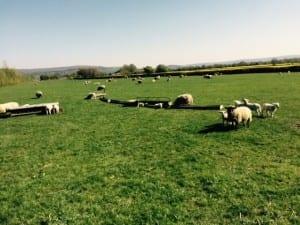 gables farm 01