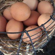 Fresh Farm Eggs sold on site….